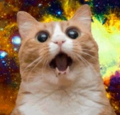 catcatsmall