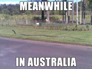 meanwhile_in_australia_640_22