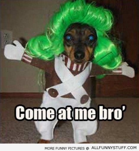 funny-dog-meme-11