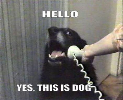 thisisdog