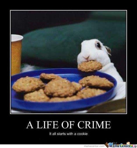 A-life-of-a-crime_o_101938