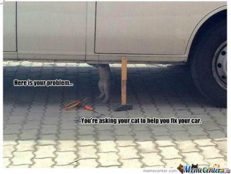 rmx-cat-repair_c_466907