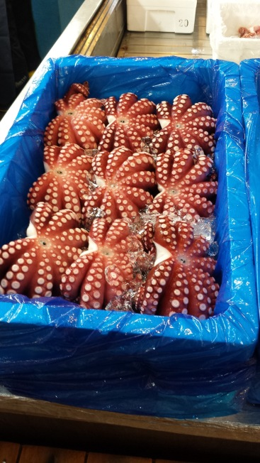Octopi at Tsukiji Fish Market