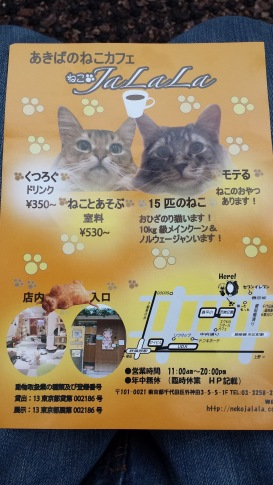 Cat cafe for lonely feline who want to meet human