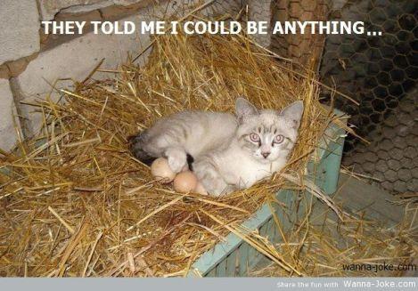 chiken-cat