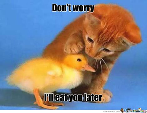Dont-Worry-I-Will-Eat-You-Later-Funny-Duck-Meme-Photo-For-Facebook